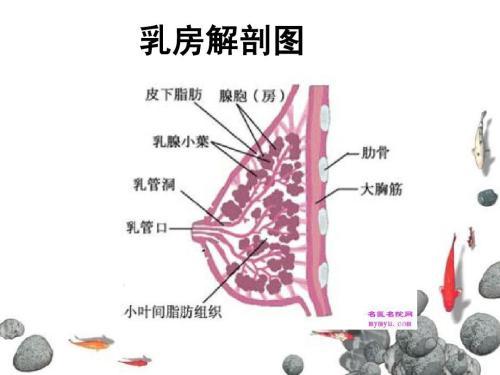 高恶性乳癌有这4种特性