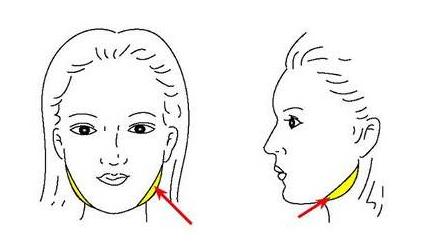 面部有哪些部位能够做面部吸脂呢?