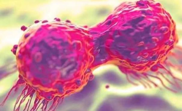 中医药结合治疗癌症,可提高人体免疫机能