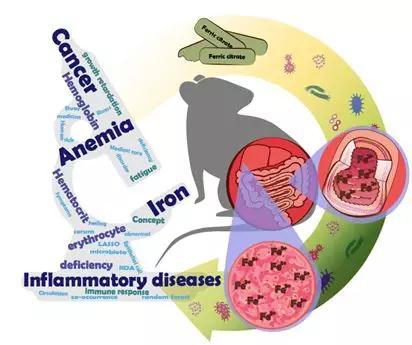 无创方式用于铁代谢异常相关疾病的早期辅助诊断