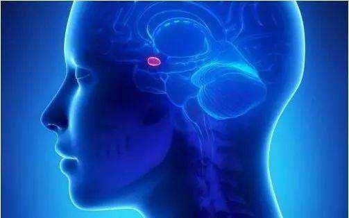 有哪些脑肿瘤信号,人们该如何去预防?