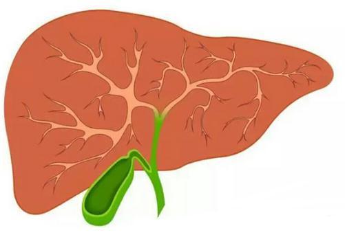肝癌为什么一确诊大部分都是晚期?