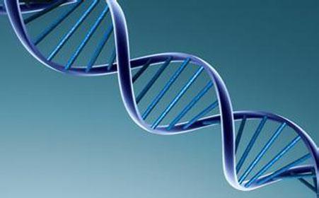 怀孕时间会改变胎儿DNA