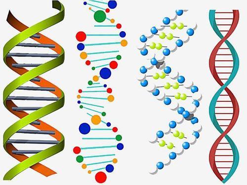 淋 巴 瘤 引 起 的 突 变 促 使 致 病 性 自 身 抗 体 的 产 生