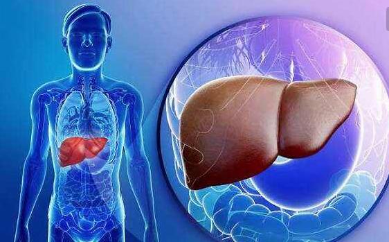 我国肝癌的发病率居全球之首