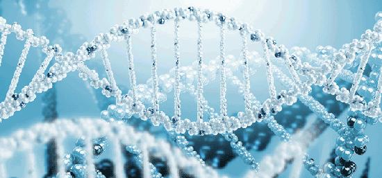 研究发现与大脑容量相关的基因