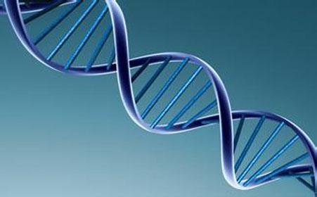 探究了人类造血干 细胞(HSC)的碱基编辑治疗