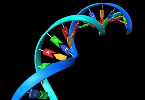 D G - G C L 的 基 因 表 达, 揭 示 了 对 精 神 分 裂 症 及 其 遗 传 风 险