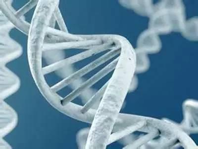 跨物种基因组揭示人类遗传人类遗传变异和种群历史