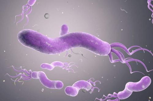 幽门螺旋杆菌除了会导致胃癌以外,还会诱发哪些癌症?