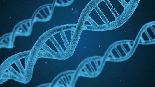 细胞基因组