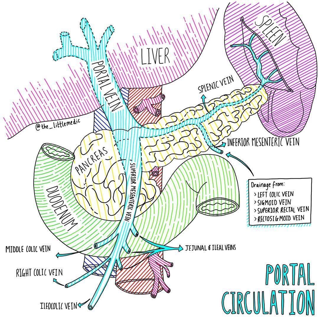 门静脉在哪里 PVTT是怎么形成的?