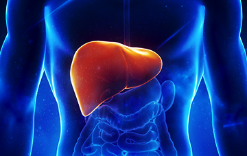 所有慢乙肝患者都需要监测肝细胞癌发生?慢乙肝患者一定会得肝癌吗?