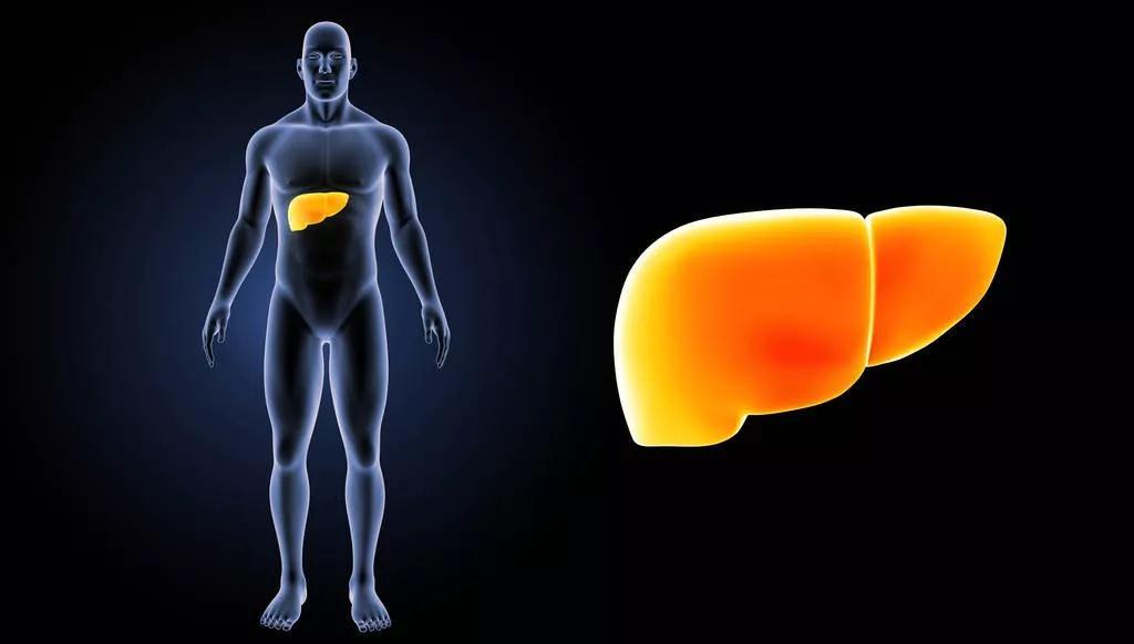 射频消融vs.立体定向放疗两者在治疗早期肝癌与肝转移癌中的系统性差别是什么?